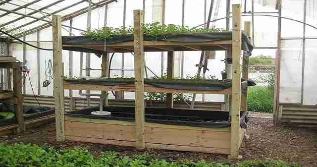 Save money, eat healthier, and be prepared for emergencies with an aquaponics or vertical garden that you can build and use yourself